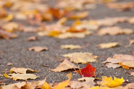 autumn colouring: Colourful foliage in autumn on a path