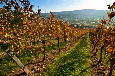 autumn colouring: View from a vineayard into a German valley Stock Photo