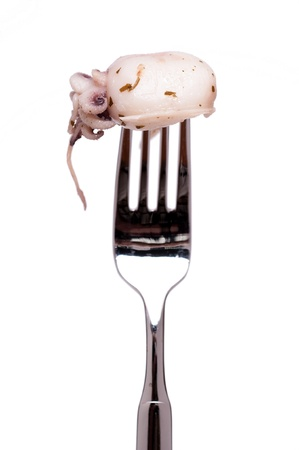 squint: White isolated fork with seafood squint