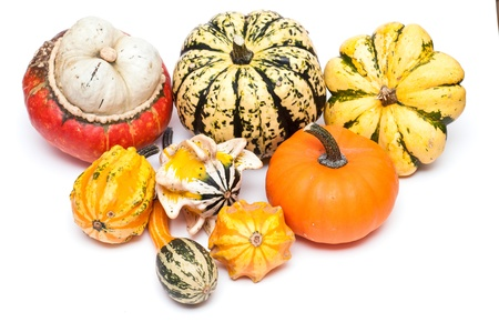 Different sorts of pumpkins on a white background photo