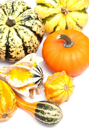 Colorful pumpkins on a white background photo