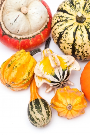 Different kinds of pumpkins on a white background photo