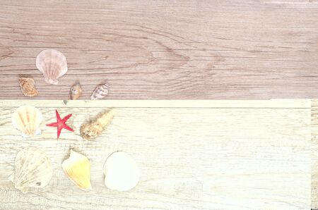Different sea shells and red starfish on weathered wood photo