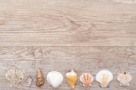 Old weathered wood with different sea shells photo