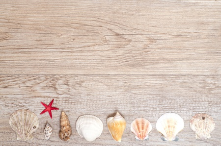 Sea shells in a row on a wooden board photo
