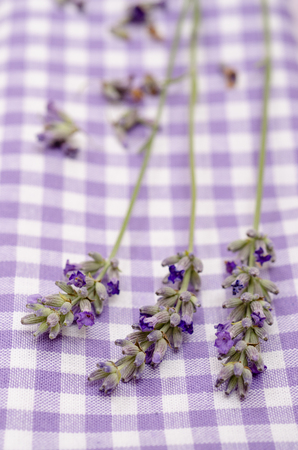 vertical format: Close up of purple lavender in vertical format Stock Photo