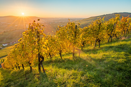Scenic sunset in autumn colours in a vineyard Stock Photo