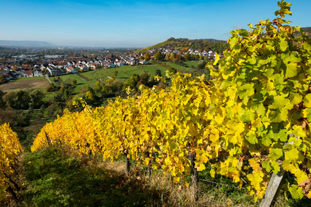 Grapevines in a vineyard with German village in autumn colouring Stock Photo