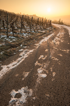 Vineyard with vines in winter with snow and sun in vertical format