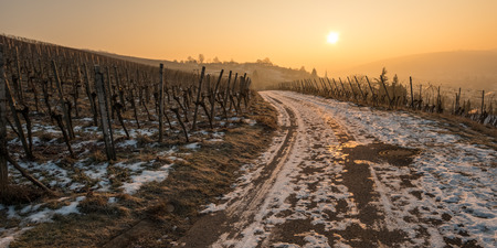 Sunrise in winter in a vineyard with snow and ice Stock Photo