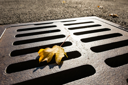 Yellow autumn leaf of a maple tree on a manhole cover in the sun