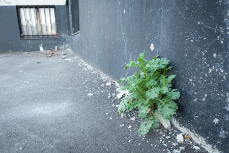 Green plant at a ramshackle building with chipped plaster in a industrial area