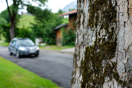 Tree with bark and moss at a road with blurred car in the background