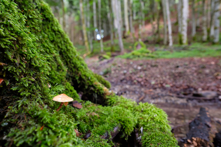 Mushroom and moss at a tree trunk in a beech forest in Bavaria Germany