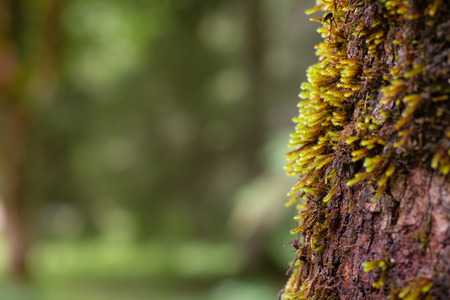 Moss at a bark of a Sycamore maple tree with bokeh and copy space Stock Photo