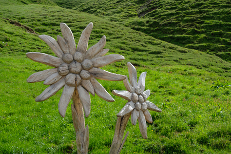 Carved wooden Edelweiss flower on a green mountain meadow