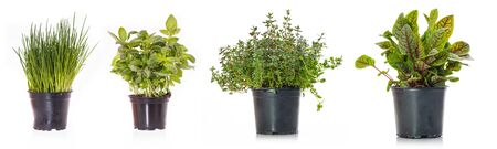 Different kitchen herbs chives basil and thyme in a pot Banco de Imagens - 143537059
