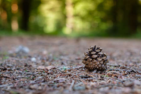 Forest soil with fir cone on track close-up