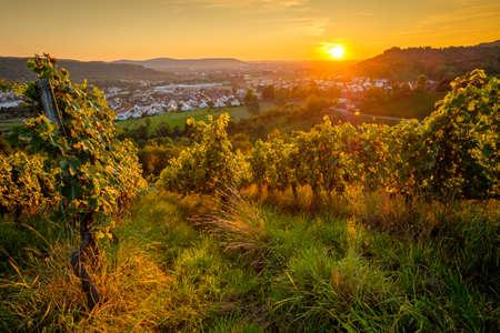 Sun in vineyard in summer with vines landscape