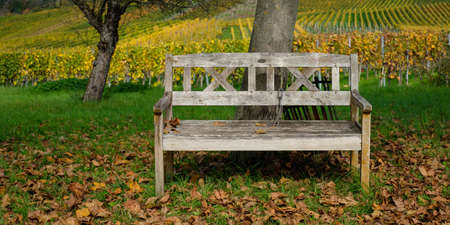 Wooden bench in front of a vineyard in autumn coloring