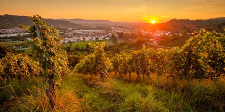 Vineyard sunset in summer evening Germany