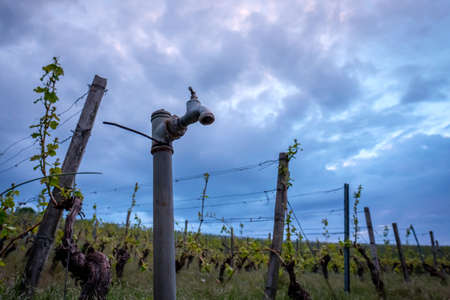 Water faucet in the dark sky in a vineyard with vines