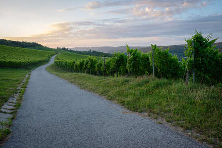 Road in vineyard with clouds in dawn sky horizontal format