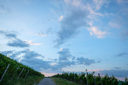 Clouds in dawn sky with road in vineyard landscape Stok Fotoğraf