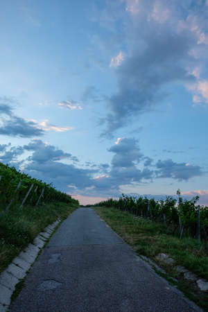 Road in vineyard with clouds in dawn sky vertical format