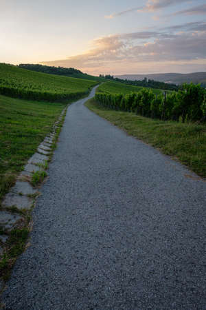Road in vineyard with clouds in dawn sky vertical format landscape