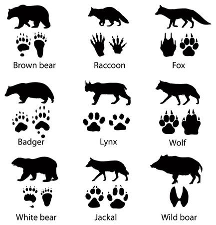 huellas de pies: Animales siluetas y senderos