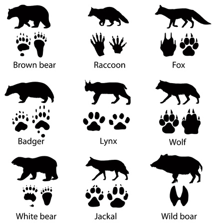 animal tracks: Animals silhouettes and trails Stock Photo