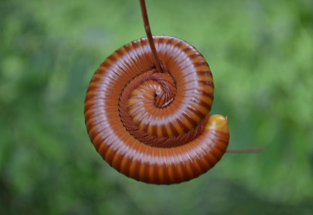 involving: a millipede is involving round the branch