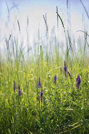 Prairie grass flowers photo