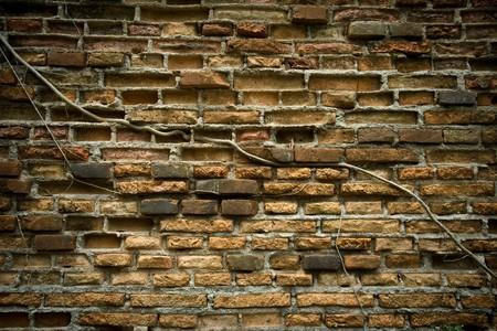 Old brick walls and wood root photo