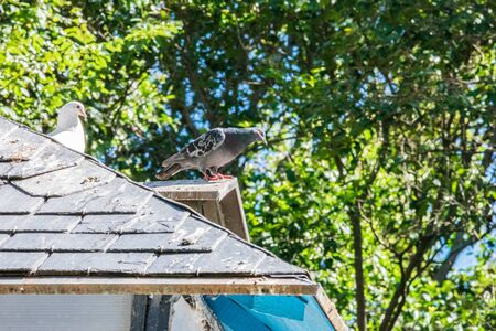 pigeons resting on the roof of the loft in the park