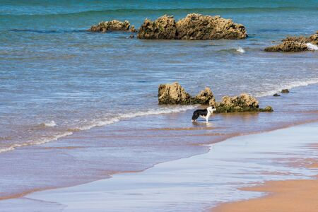 dog playing in the beach water among rocks in summer time