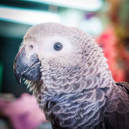 petshop: photo of brown parrot head in the petshop Stock Photo