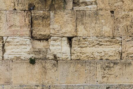 the Western wall texture with dove sitting on the stone Banco de Imagens