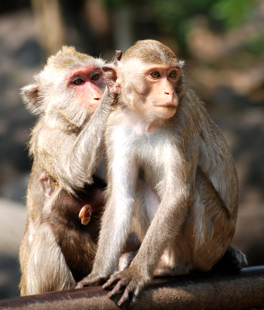 misbehave: macaque family