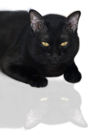 moggy: black cat isolated on the white background Stock Photo