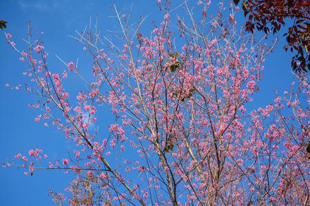 Flower queen tiger photo against the blue sky 免版税图像