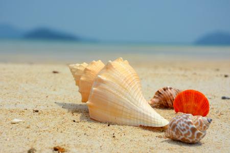 shell on sand 免版税图像