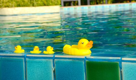 yellow duck floating in a swimming pool 写真素材