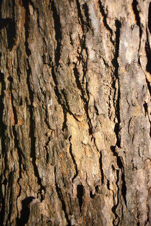 Tree bark skin