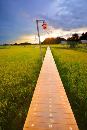 A wooden bridge in the rice field and sunset.