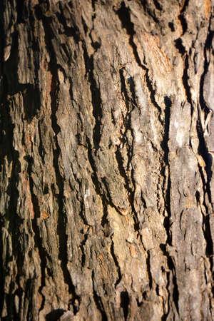 Bark of tree. Nature wallpaper