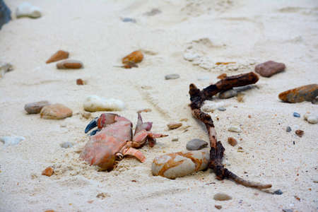 Dead crab carcass in the sand.