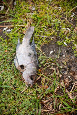 dead fish and many flies