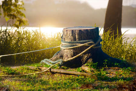 The stump of the felled tree in the summer garden on the green meadow